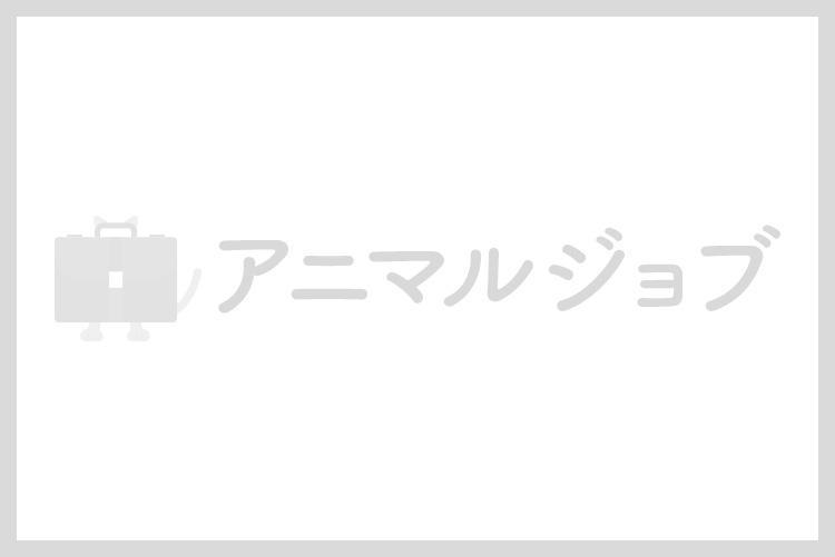 非公開求人:動物看護師募集【正社員】【福岡県福岡市城南区】a0b7F000000Oa1KQAS_1_410_b画像