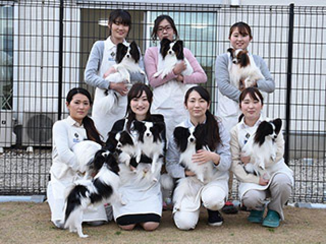 Griffin Papillon KENNELのペットシッター募集(正社員)画像