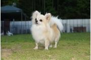 TOP PET@Premium 本店の飼育・清掃スタッフ募集(正社員)画像