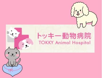 【トッキ―動物病院/動物看護師(正社員)募集】些細なことも相談しやすい♪地域密着型で和やかな雰囲気の動物病院です!画像