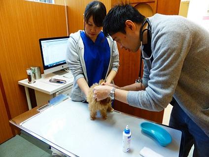 アニーマどうぶつ病院の動物看護師兼トリマー募集(正社員)画像