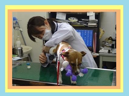 ☆★まつもと動物病院の動物看護師(正社員)の募集です★☆画像