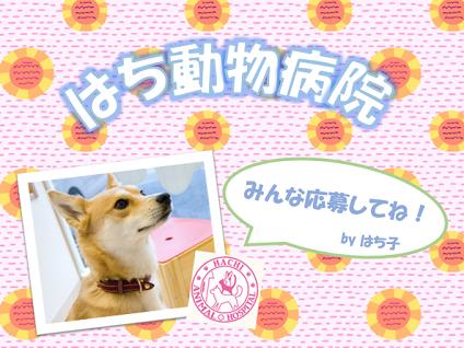 はち動物病院[羽村市神明台]の獣医師さんを募集中!【正社員】の画像