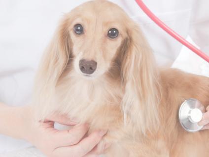*:.。.☆つかさ動物病院の動物看護師(アルバイト・パート)募集☆.。.:*画像