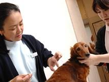 。*☆彡吉池獣医科病院の動物看護師[正社員]を募集中。*☆彡画像