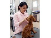 □■海浜動物医療センター■□ 動物看護師の募集【正社員】の画像