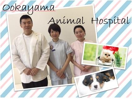 >>★大岡山動物病院の動物看護師さん募集[正社員]★<<画像