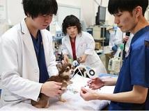 <<さくら動物病院>>獣医師の募集[アルバイト・パート][弥富市]画像
