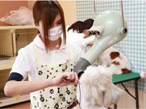 <<さくら動物病院>>トリマーの募集[アルバイト・パート][弥富市]画像