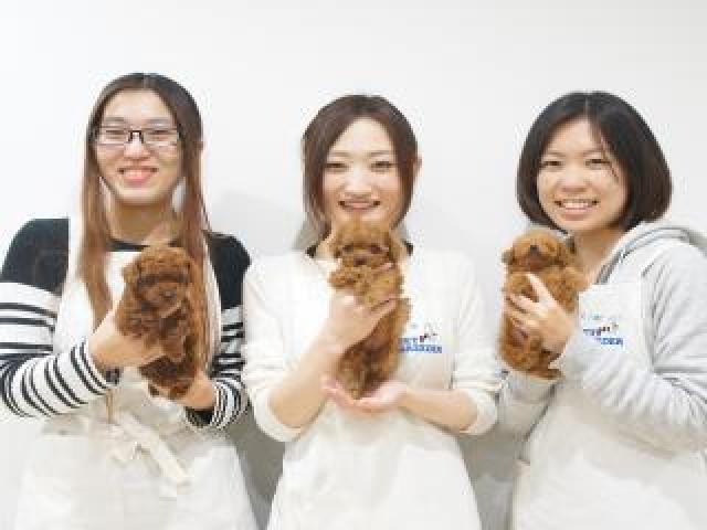 TOP PET川崎店のショップ店員募集(正社員)画像