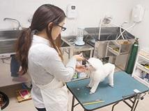TOP PET川崎店のトリマー募集(正社員)画像