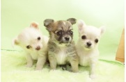 TOP PET東京都下店の飼育・清掃スタッフ募集(アルバイト・パート)画像
