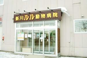 新川ルル動物病院画像
