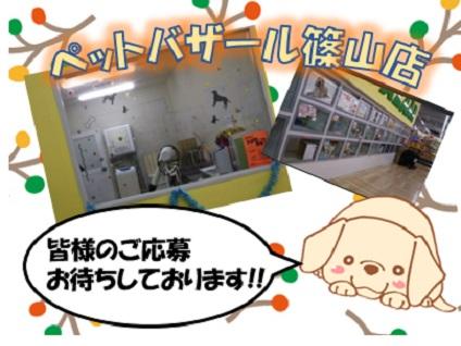 ペットバザール篠山店画像