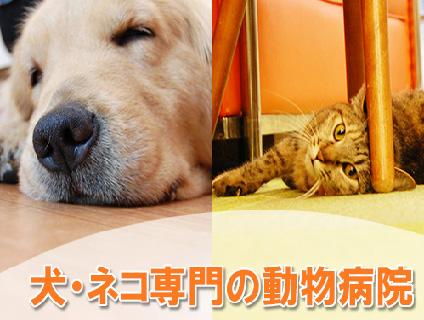 塩田動物病院(有限会社エフアンドエス)画像