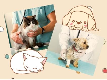 かしわだい動物病院画像