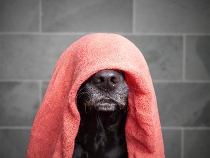 ワンちゃんのお風呂屋さん APARAGI DOG画像