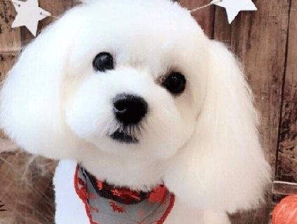 fido dog care(ファイド ドッグ ケア)画像