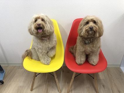 ZUTTO DOGの画像