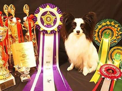 TOP PET@Premium 本店の飼育・清掃スタッフ募集(アルバイト・パート)の画像
