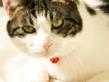 [ドラセナ動物病院]動物看護師の募集![アルバイト・パート/東京都足立区]画像