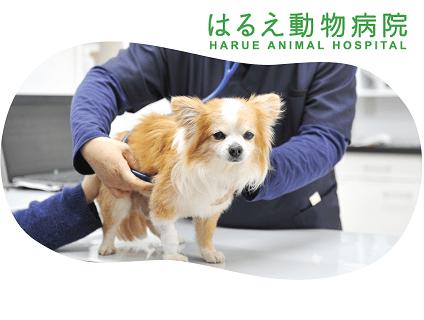 はるえ動物病院の画像
