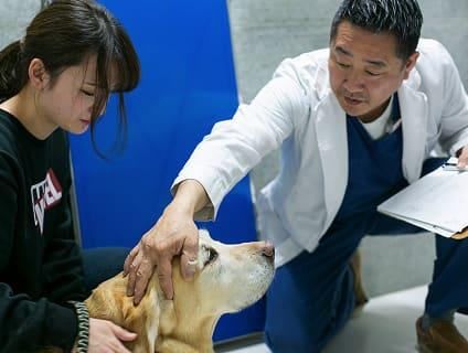 〔辻堂犬猫病院〕◆獣医師募集中◆正社員◆神奈川県藤沢市◆の画像