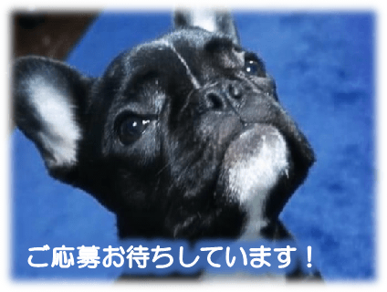 [はるかぜ動物病院]動物看護師(正社員)大募集中!![愛知県刈谷市]No.314_d画像