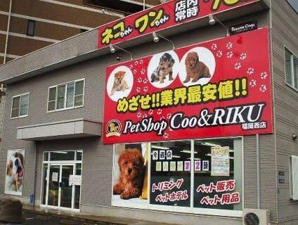 【Coo&RIKU(クーアンドリク) 福岡西店】トリマーさん(正社員)募集中♪[福岡県福岡市西区]画像