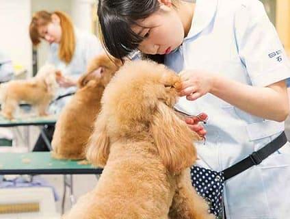 [北海道どうぶつ・医療専門学校]トリマー講師の募集♪[非常勤/北海道札幌市]画像
