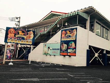 【海動物病院 立川往診所】獣医師(アルバイト・パート)募集中♪[東京都立川市]画像
