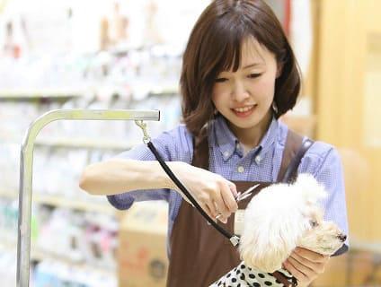 イオンペット PeTeMoビューティサロン日の出店の画像1