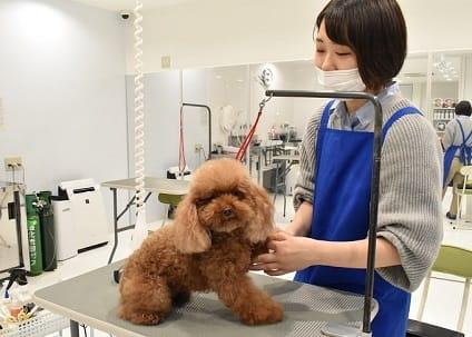 TOP PET東京都下店の画像