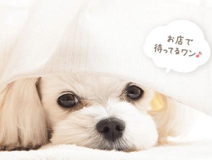 [dog beauty design salon ワンコdeワンコ]トリマーさんの募集♪[正社員/福岡県久留米市]No.110_b画像