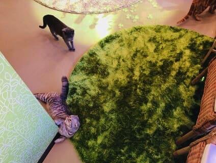 【Coo&RIKU(クーアンドリク) 新宿3丁目店】トリマーさん(正社員)募集中♪[東京都新宿区]画像