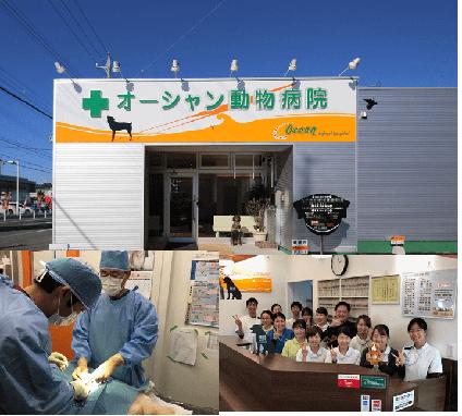 オーシャン動物病院[新卒]の画像1