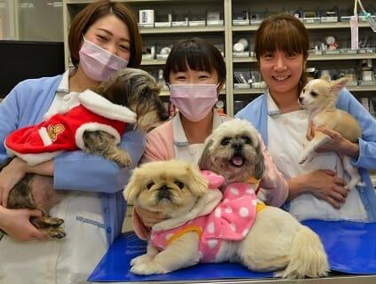 【武蔵村山市三ツ藤】◇◆ヒマラヤン動物病院で動物看護師(正社員)の募集!◆◇の画像