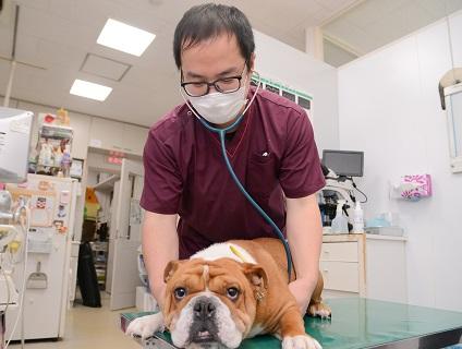 藤野動物病院の画像