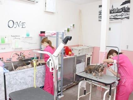 PET SALON ONE×ONE 狭山本店(ペットサロン ワンワン)の画像