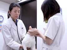 【鈴木犬猫病院】動物看護師さんを募集しています!(正社員/千葉市稲毛区)画像