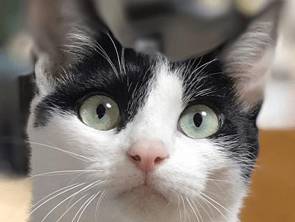 非公開求人:動物看護師募集【正社員】【東京都八王子市】a0b7F000000OUft_2画像