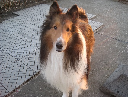 Dog&Cat Dearの画像