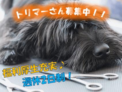 高橋犬猫病院 ペットサロン・サンタの画像
