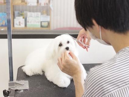 ドッグサロン シェリーライフガーデン勝川店の画像