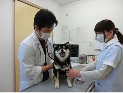 [陽だまり動物病院]獣医師の募集![パート/長野県下伊那郡]No.110_bの画像