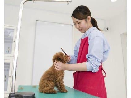 TOP PET@Premium本店のトリマー募集(正社員)画像