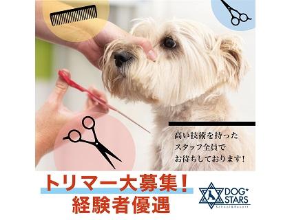 【DOGSTARS School&Resort/トリマー募集(正社員)/神奈川県横浜市中区】No.107_b画像