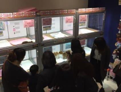 【Coo&RIKU(クーアンドリク) 神戸三宮店】トリマーさん(アルバイト・パート)募集中♪[兵庫県神戸市中央区]画像