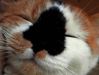 非公開求人:動物看護師募集【正社員】【神奈川県横須賀市】a0b7F000000Oa28QAC_2画像