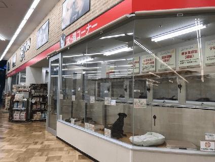 ビバペッツ和泉中央店の画像